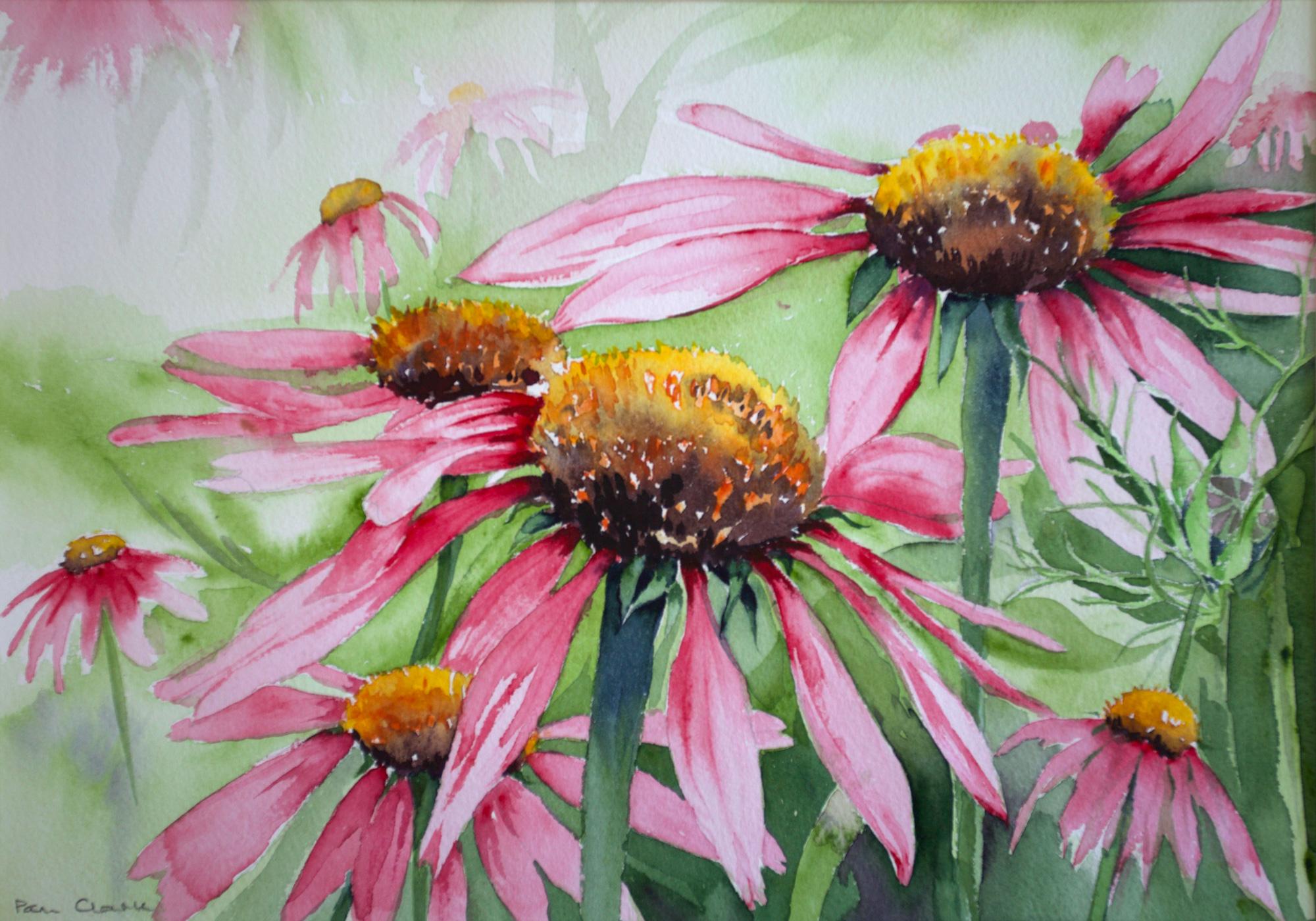 Pam Clark | Echinacea Purpurea | Watercolour | 42x32cm | £130