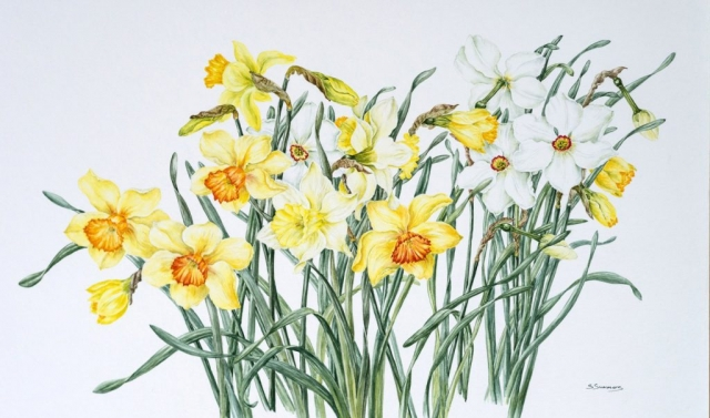 Sandra Summers | Daffodil Selection | Watercolour | 80x57cm | £550