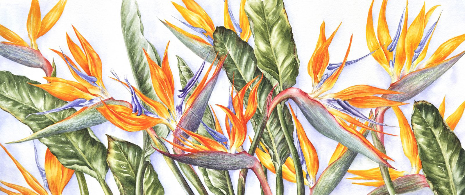 Sandra Summers | Strelitzias | Watercolour | 94x57cm | £700