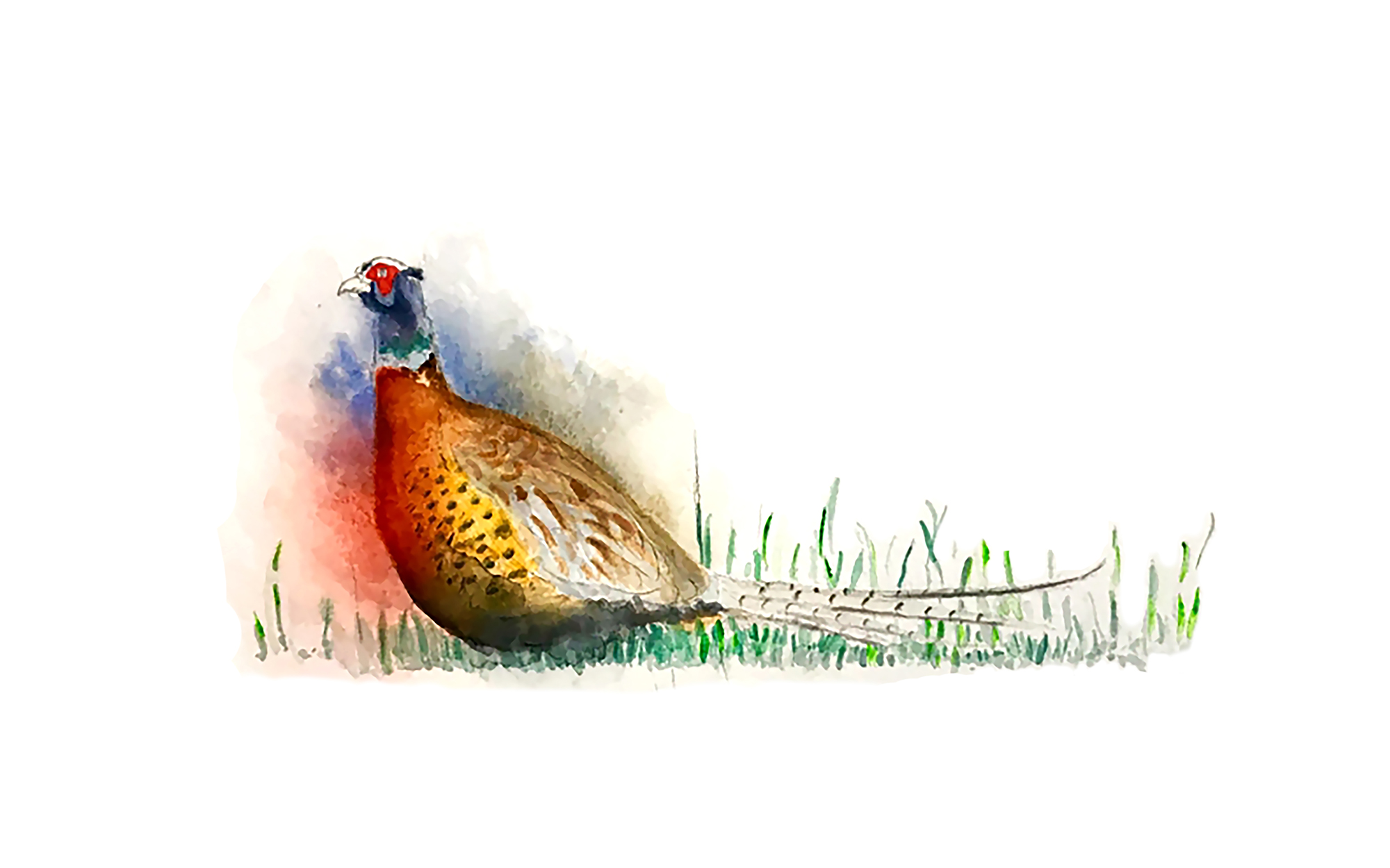 Nick Selby Bennett | Big Fat Smudged Pheasant |