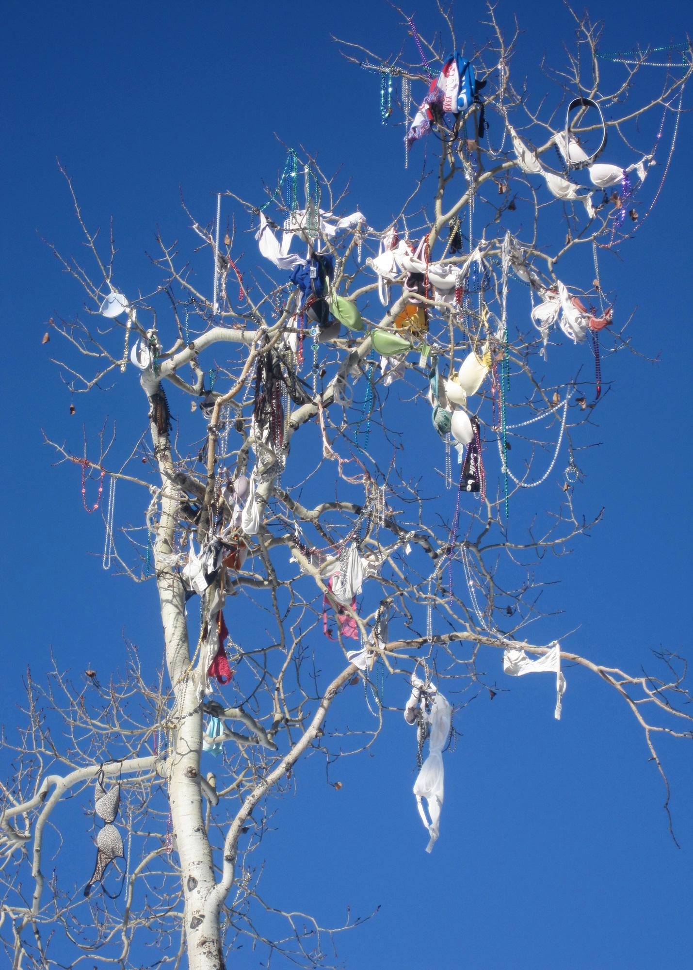 Susannah Hubert | Bra Tree, Jackson Hole, Wyoming | XMAS CARD | Pack x 10 £9