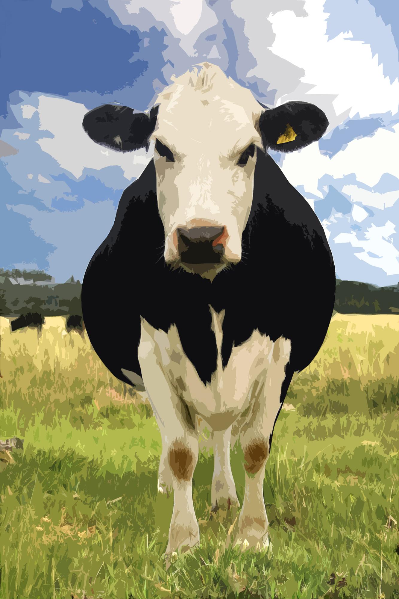 Susannah Hubert | Cow on Egdon Heath | Photography